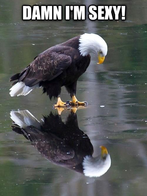 eagles birds reflection sexy - 8120626432