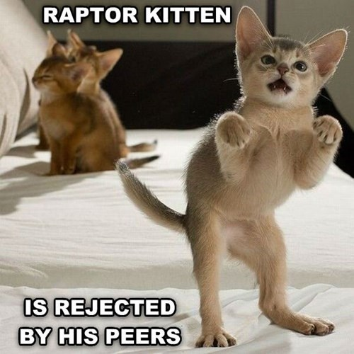 cute Cats velociraptor - 8120646144