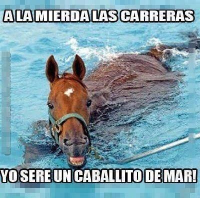 bromas Memes animales - 8120675328