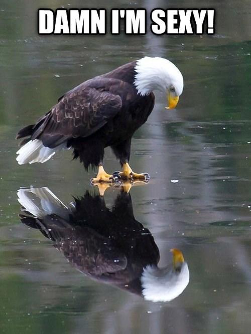 eagles bald eagle - 8120752896