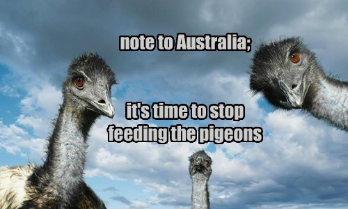emus birds australia pigeons - 8120843008