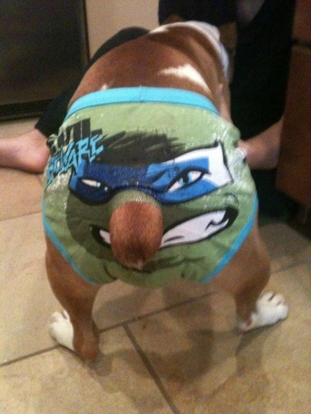 teenage mutant ninja turtles,dogs,TMNT,poorly dressed,briefs,underwear