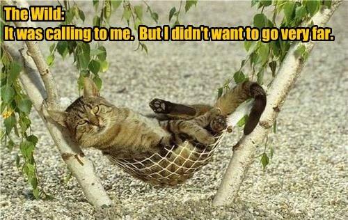hammock lazy the wild Cats - 8120883968