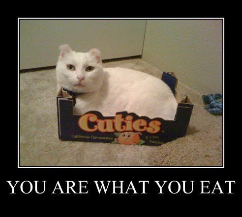 you are what you eat,boxes,Cats