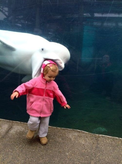photobomb dolphin kids aquarium parenting g rated - 8121724416