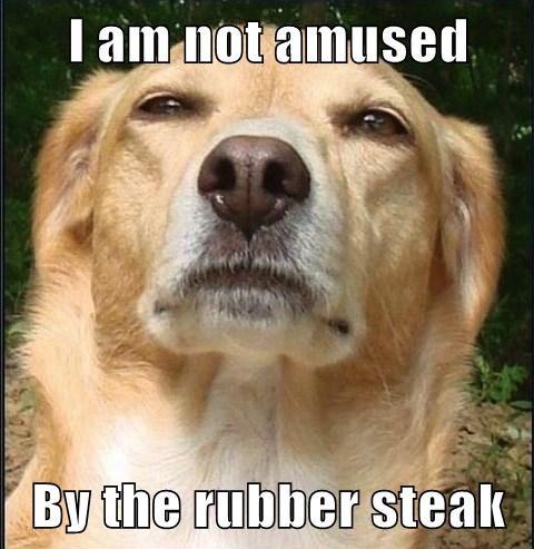 dogs tricks funny - 8121761536