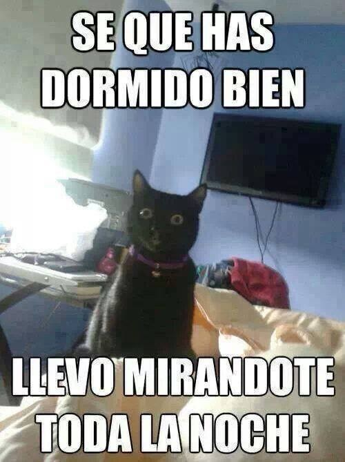 gatos Memes animales - 8121764608