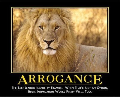 lions arrogance funny animals - 8121776384
