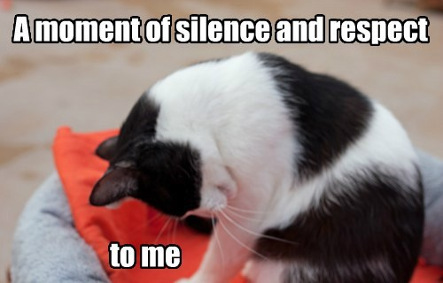 moment of silence pride Cats funny - 8121812992
