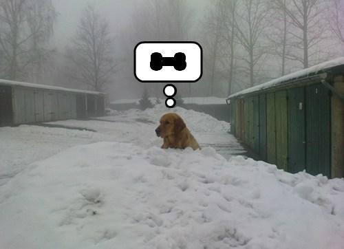 dogs bones snow cute - 8121821184