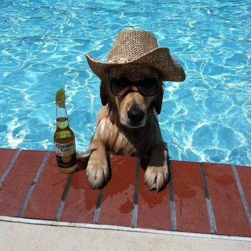 beer dogs swimming - 8121849856