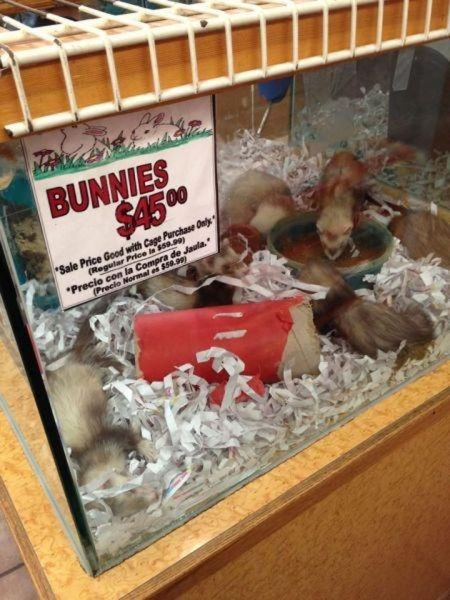 bunnies signs ferrets wrong funny - 8121970944