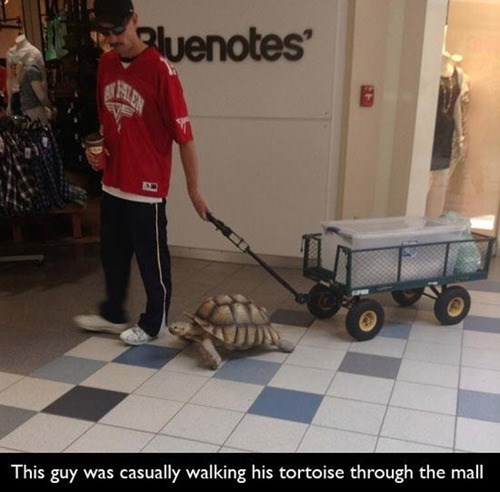 friends,tortoise,funny,weird