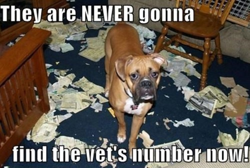 dogs cute destroy vet funny