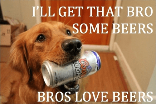 beer bros dogs funny - 8122352384