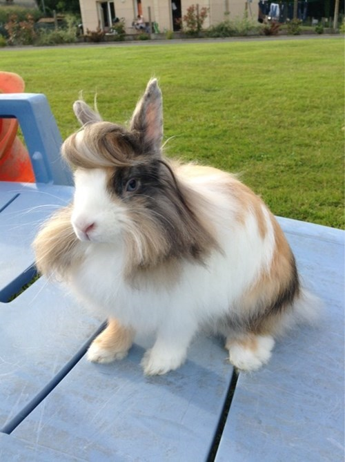 bangs hair puns rabbit poorly dressed - 8122918912