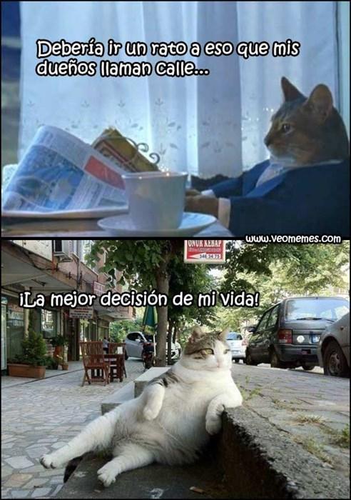 Memes animales gatos - 8122966272