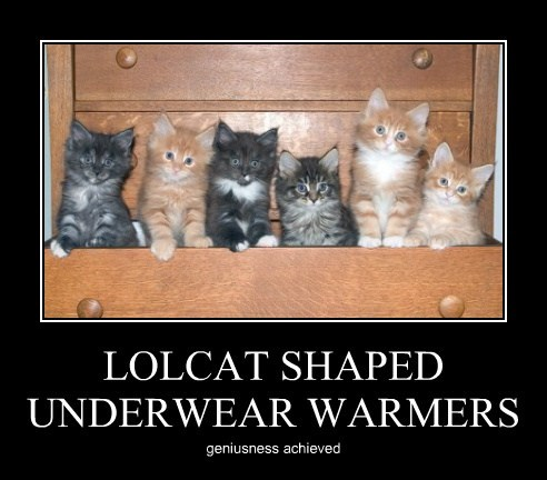 cute,funny,kitten,underwear,warm