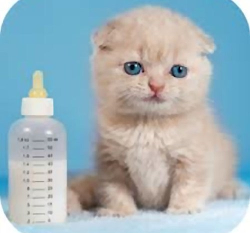 bottle Babies kitten cute nursing - 8123077632