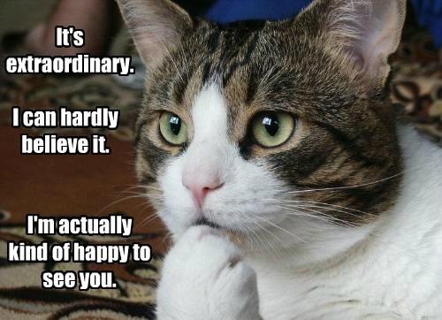 cranky Cats funny - 8123081472