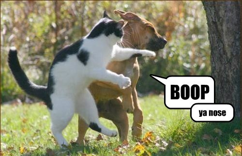 Cats boop dogs whoops - 8123110912
