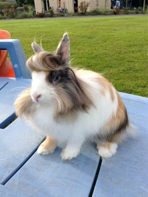 funny,rabbits,hair style,weird,suavé