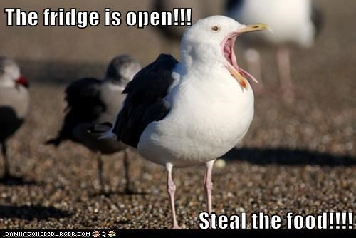 food,fridge,seagulls
