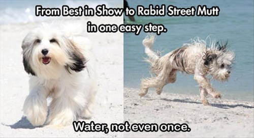 dogs funny Not Even Once water - 8123262464