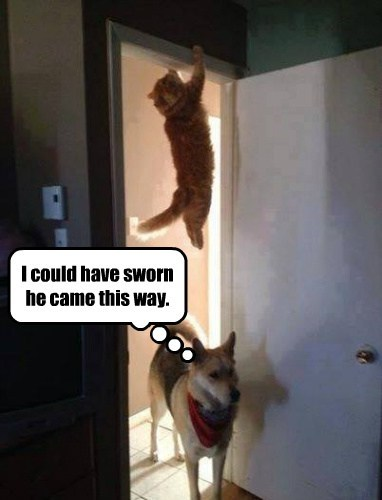 dogs hanging Cats hiding funny - 8123263232