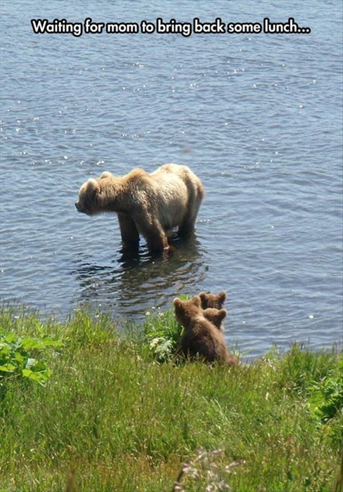 cute,bears,lunch,mom