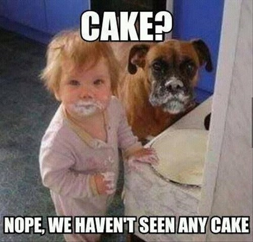 Babies cute cake dogs partners in crime