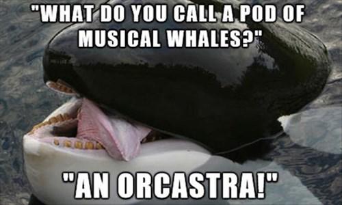 puns,Music,whales