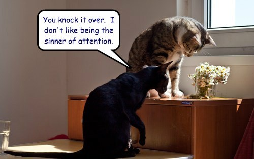 peer pressure temptation flowers Cats funny - 8123336704