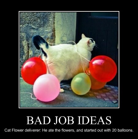 BAD JOB IDEAS Cat Flower deliverer: He ate the flowers, and started out with 20 balloons.