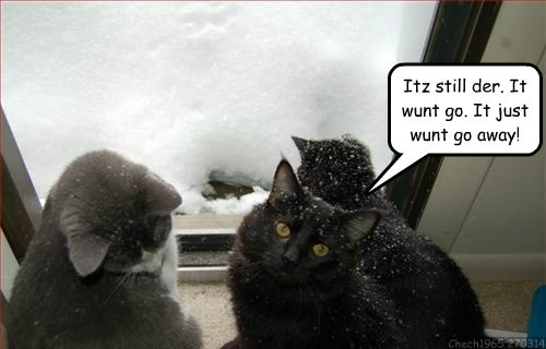 Cats cold snow spring winter - 8123871232