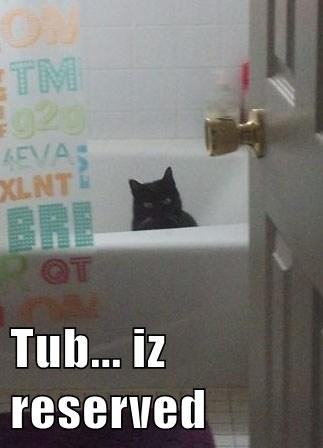 Cats,baths,funny,water
