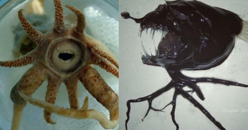 deep sea creatures, russia, creepy fish