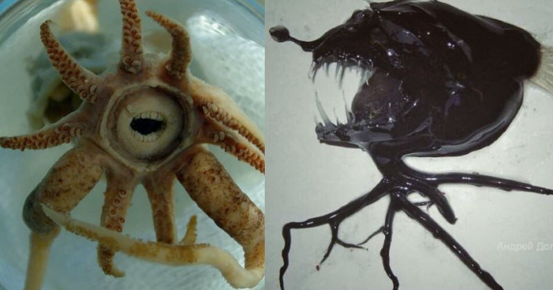 deep sea creatures, russia, creepy fish