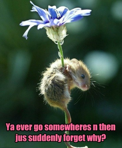 cute flowers forgetful mice spring - 8123921664
