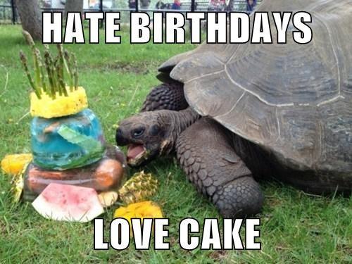 cake birthdays old tortoise - 8124019456