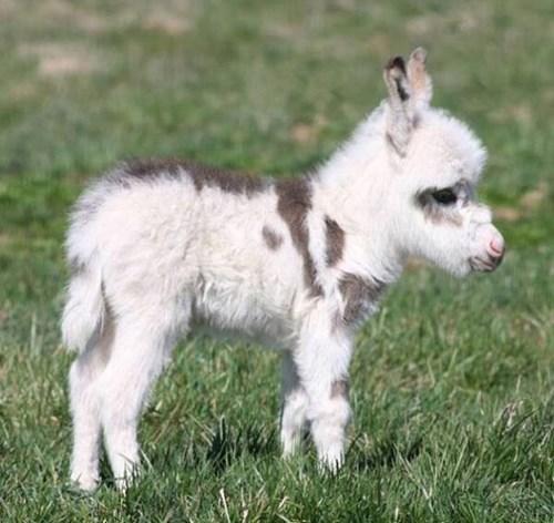 Babies fuzzy donkeys - 8124356096