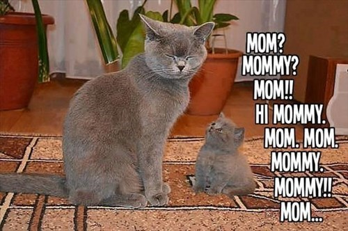 annoying Cats kids moms