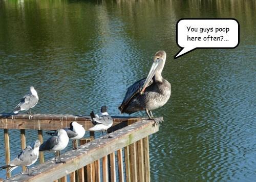 poop birds funny - 8125475840