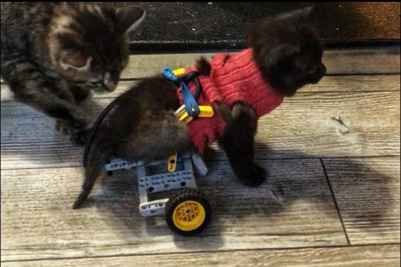 lego kitten foster dad wheelchair - 8125701