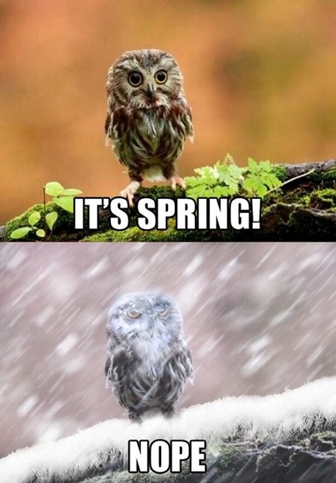 spring owls seasons winter animals - 8125738752