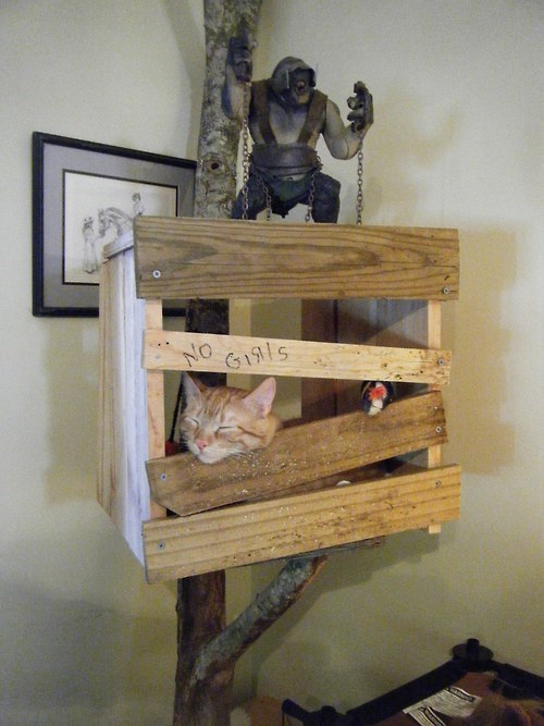 cat tree,Cats,no girls allowed,funny