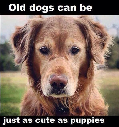 dogs,cute,older