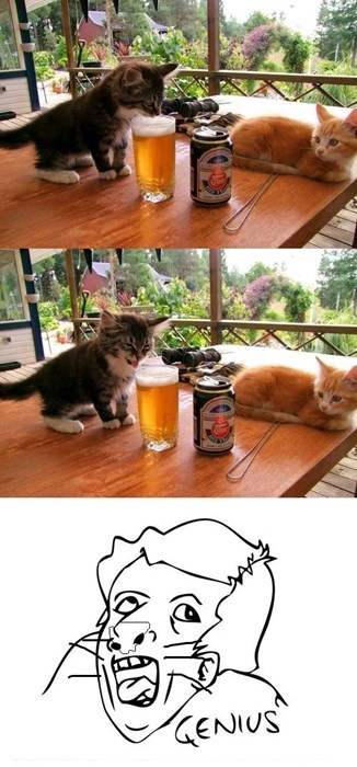 gatos Memes animales - 8125923840