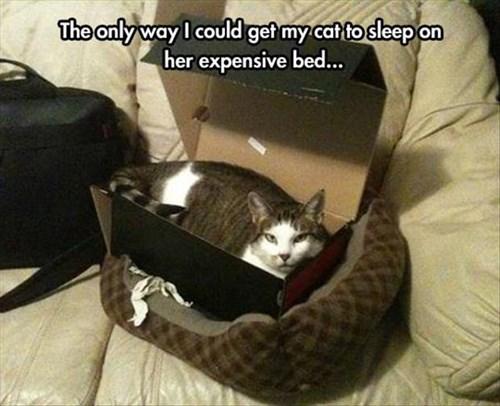 boxes if i fits i sits Cats funny - 8125934336