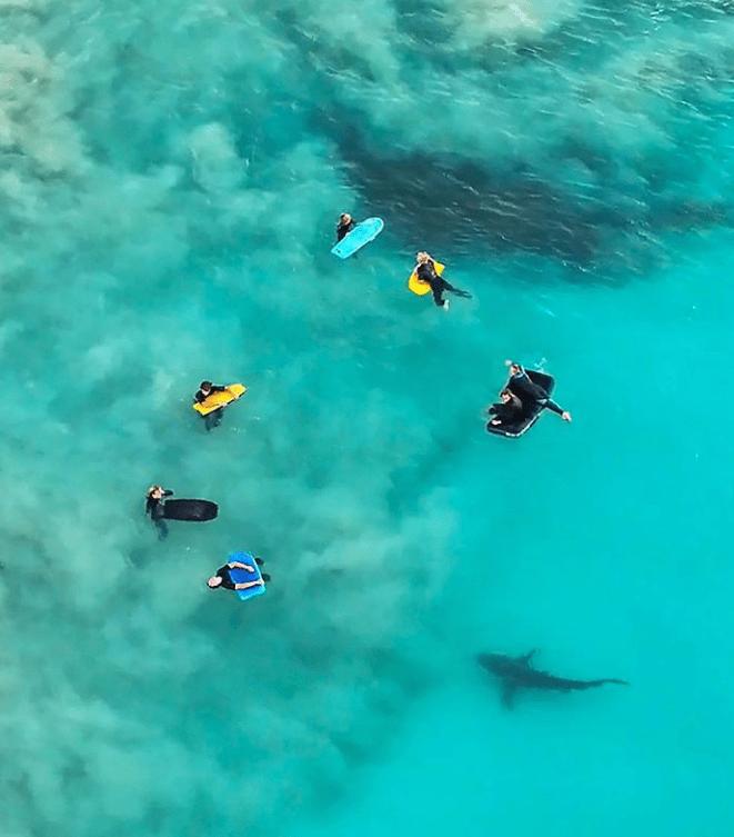 photography wild animals marine australian wildlife - 8125957